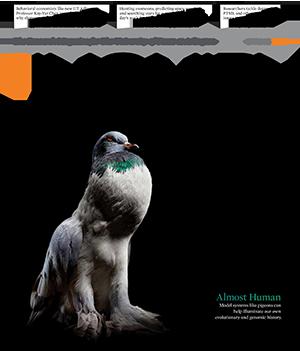 Inquiry Magazine 2015