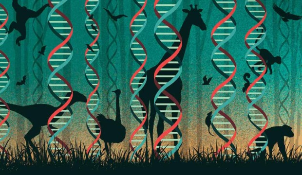 DNA double helixes stand like trees with shadows of animals, like apes, giraffes, birds.