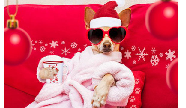 Chihuahau in pink robe, wearing a Santa hat and holding a cup of hot chocolate.