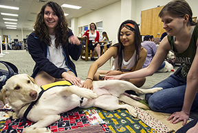 paws for finals-Maddie