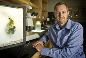 Dr. Matt Walsh