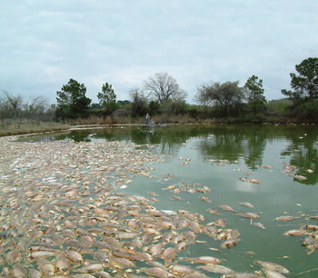 fish kill at Lake Granbury